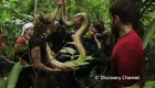 view : Anaconda: Eaten Alive