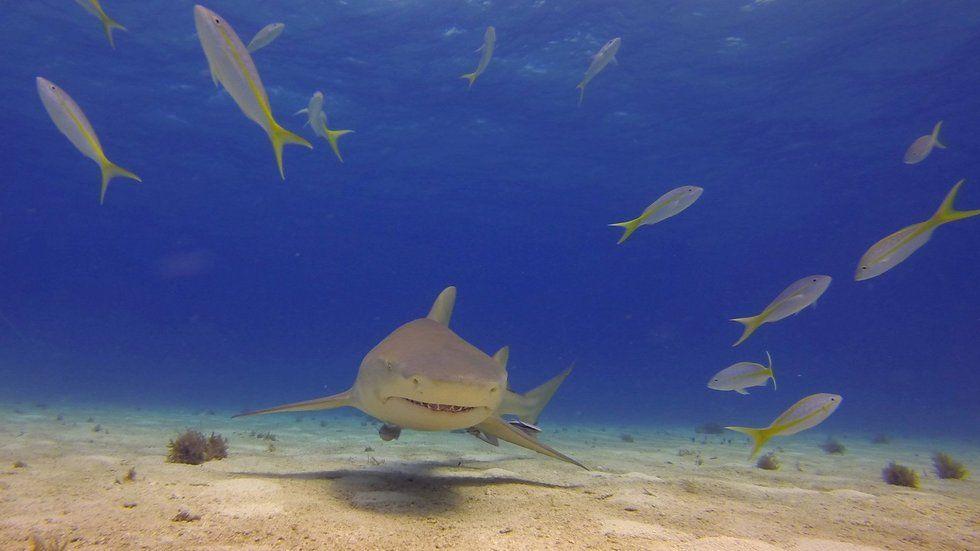 Shark week, Discovery