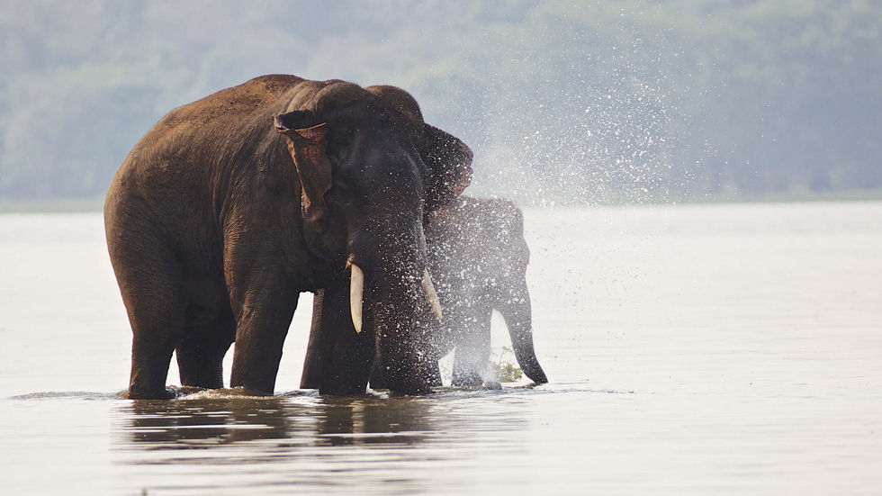 Lands of the Monsoon, BBC earth, monsoon, nature, wildlife, new