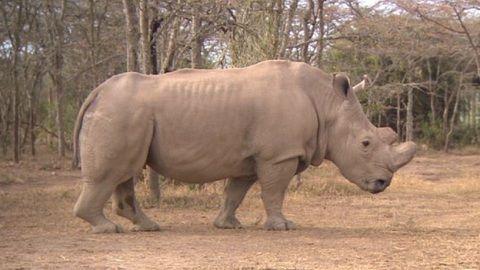 DStv_Kenya_White_Rhino