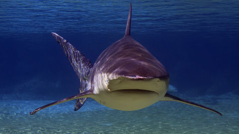 DStv_SharkHabitat_10_shark habitats_freshwater