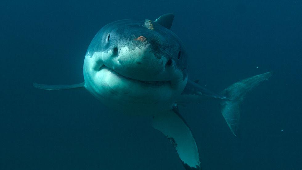 DStv_SharkWeek_DiscoveryChannel_IsleofJaws