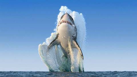 DStv_Discovery_SharkWeek