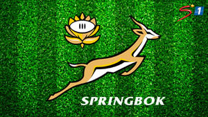DStv_SuperSport_SpringbokRugby