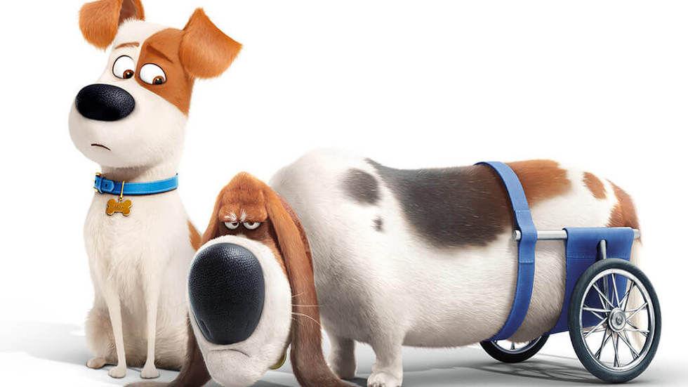 DStv-Now_App_The-Secret-Life-of-Pets