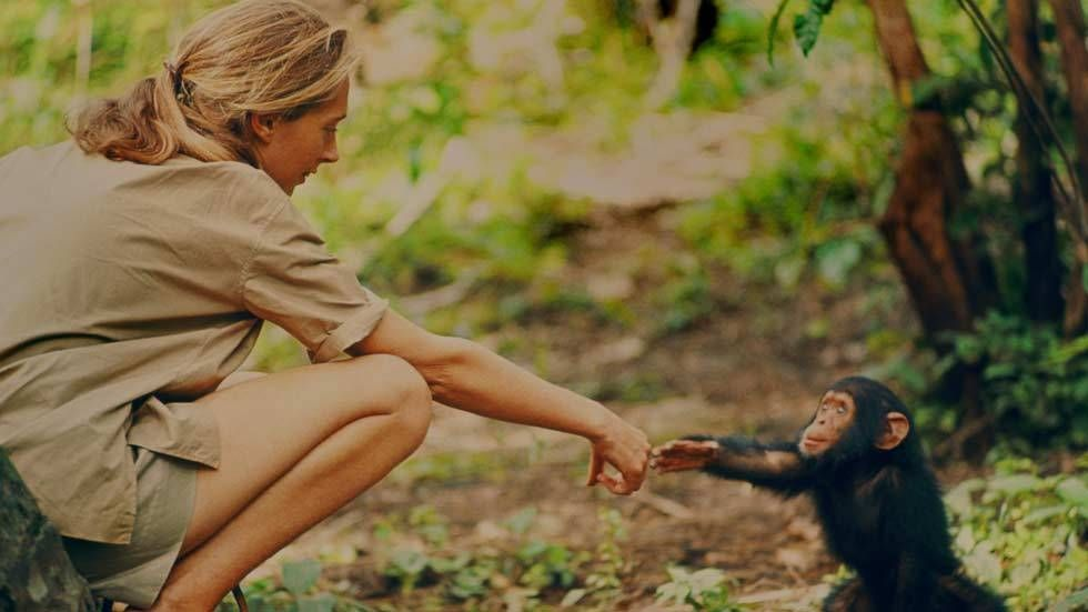 An image of Jane and chimpanzee