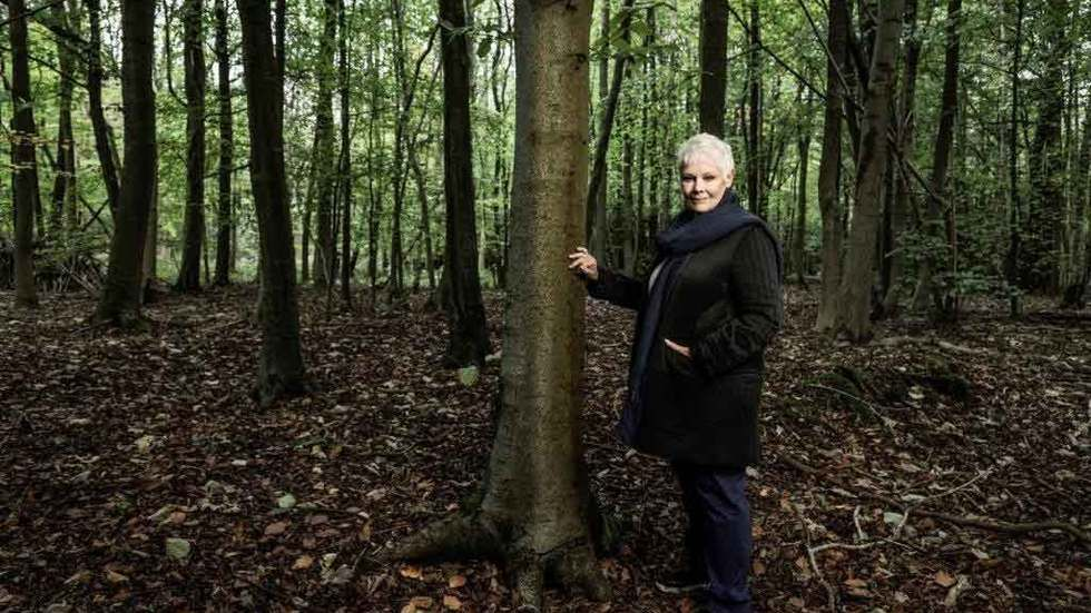 Judi Dench touches a tree in a forest