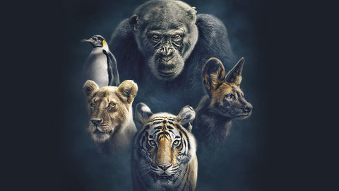 DStv_Dynasties_BBCearth