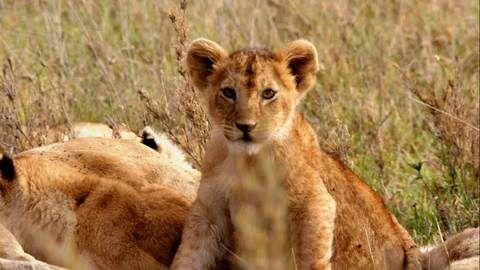 dstv,documentarios,nat-geo-wild,BornInAfrica_Ep102_08.jpg